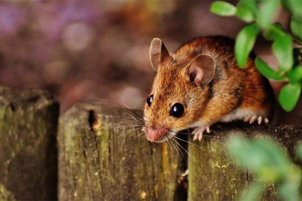 Quel appareil utiliser pour lutter contre les souris ?